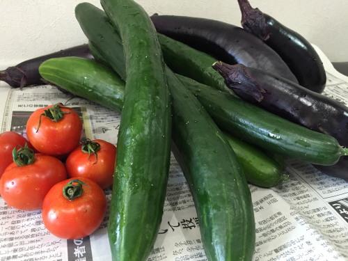 採れたて夏野菜