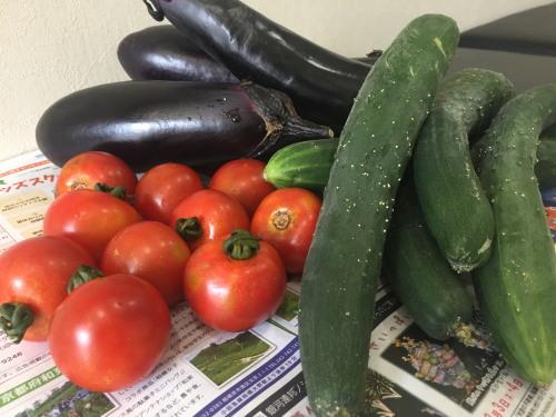 採れたて夏野菜♪